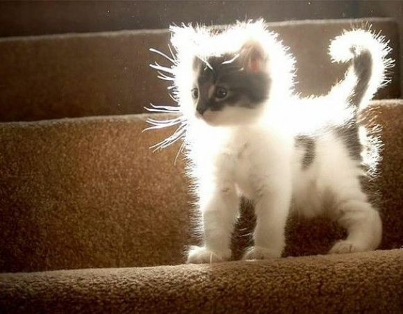 Instant Happiness-30 Cute Photos of Cats (20)
