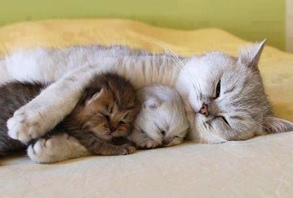 Instant Happiness-30 Cute Photos of Cats (22)