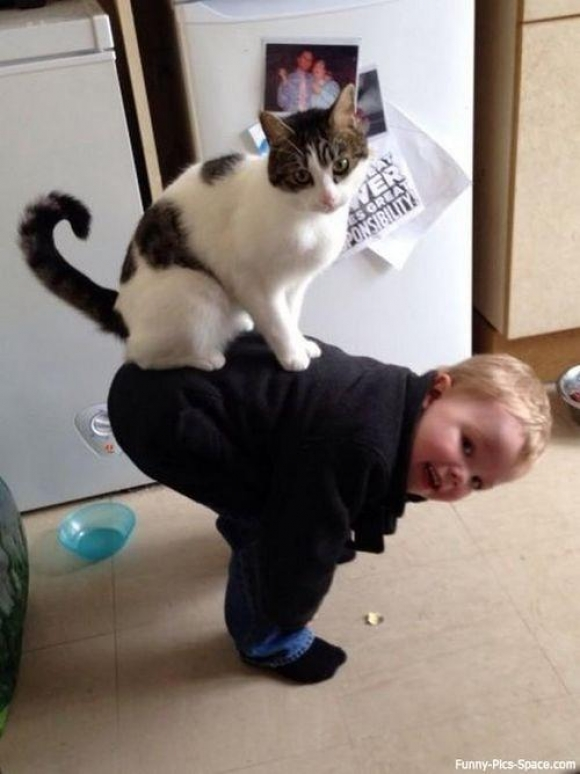Instant Happiness-30 Cute Photos of Cats (26)