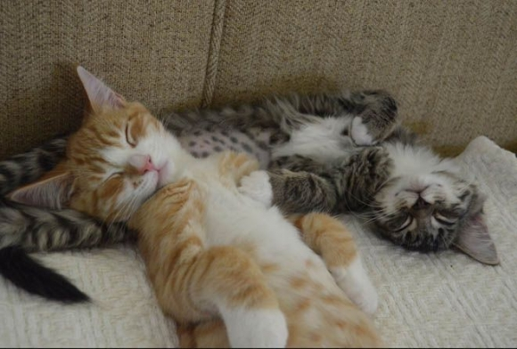 Instant Happiness-30 Cute Photos of Cats (31)