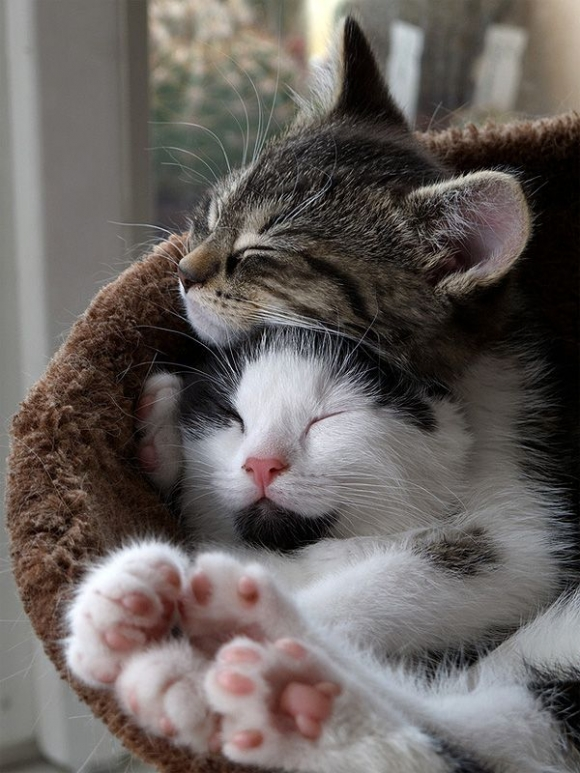 Instant Happiness-30 Cute Photos of Cats (32)