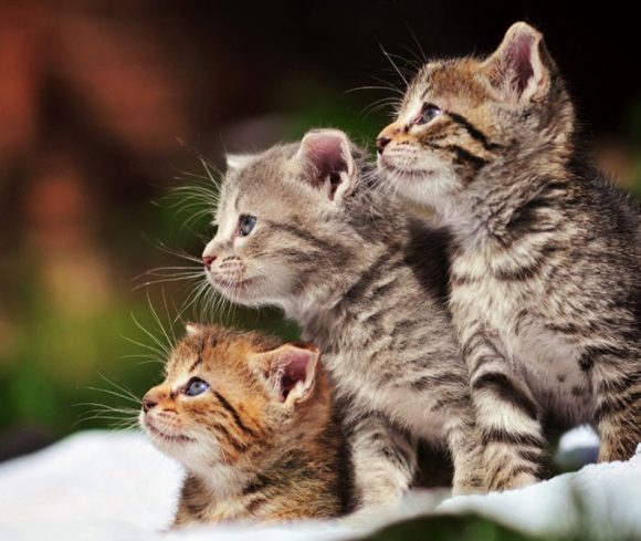 Instant Happiness-30 Cute Photos of Cats (36)