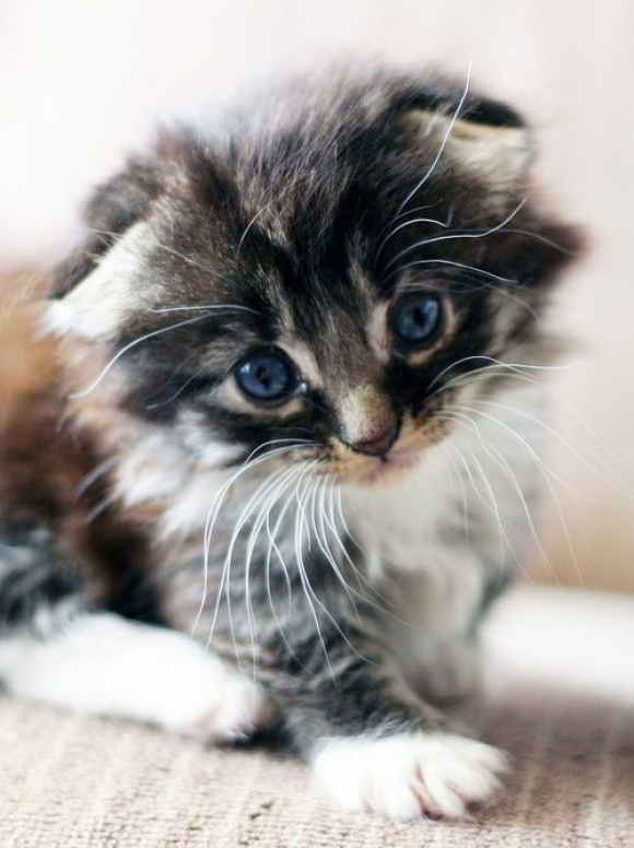 Instant Happiness-30 Cute Photos of Cats (42)