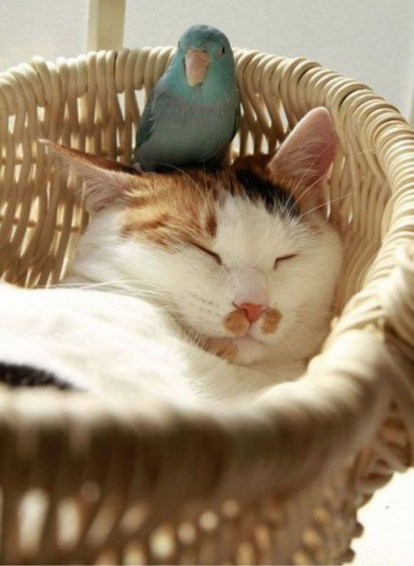 Instant Happiness-30 Cute Photos of Cats (50)