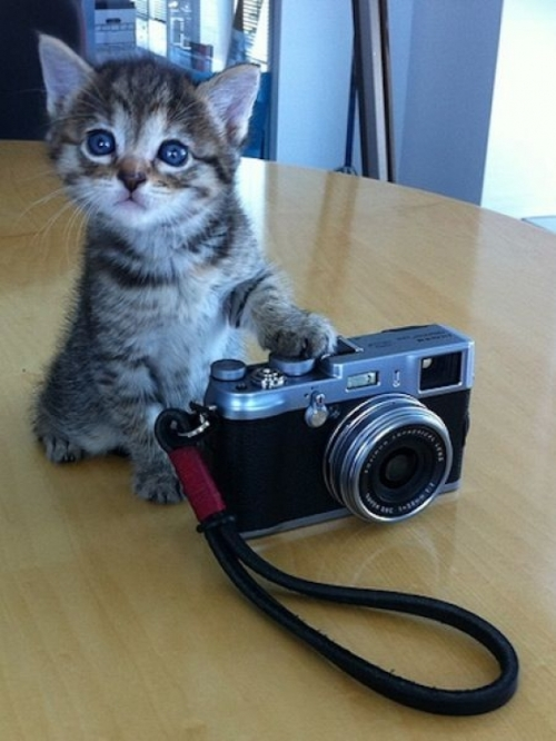 Instant Happiness-30 Cute Photos of Cats (8)
