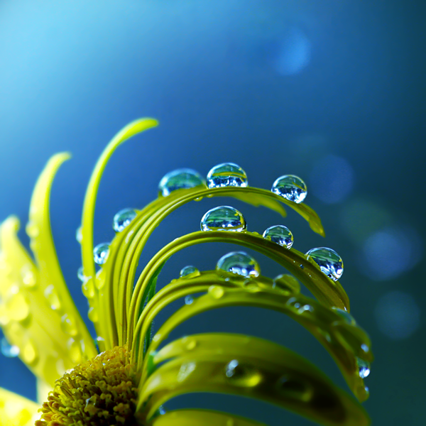 Macro Photography by Joakim Kraemer (1)