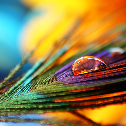 Macro Photography by Joakim Kraemer (4)