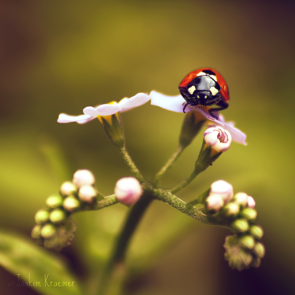 Macro Photography by Joakim Kraemer (5)