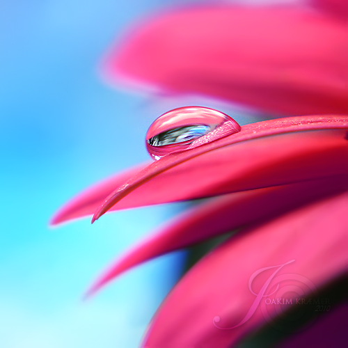 Macro Photography by Joakim Kraemer (8)