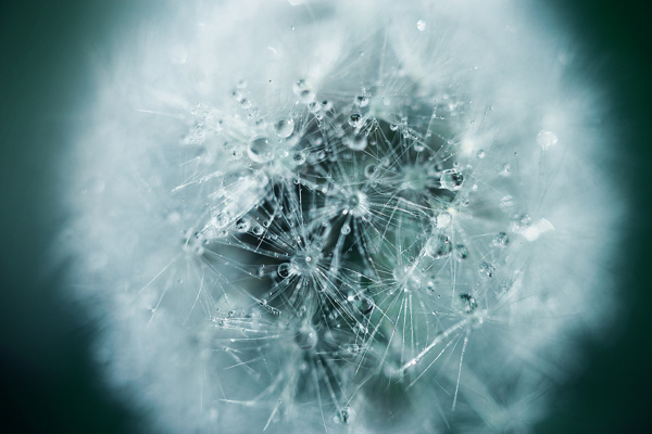 Macro Photos by Oleg Zhukov (2)