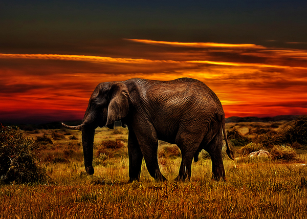 out africa by yara gb 70 Jaw Dropping HDR Photographs