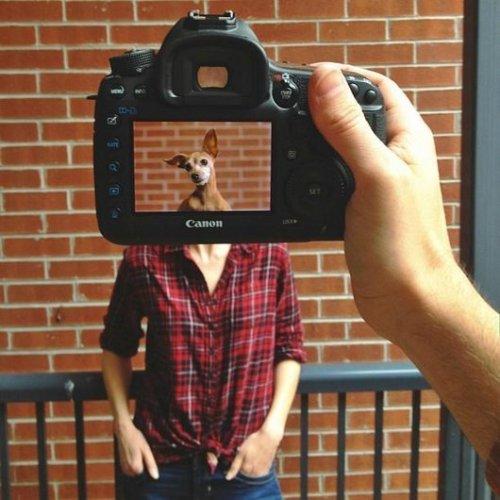 Petheadz by Zack Rose (1)