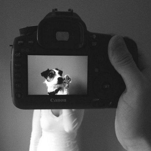 Petheadz by Zack Rose (3)