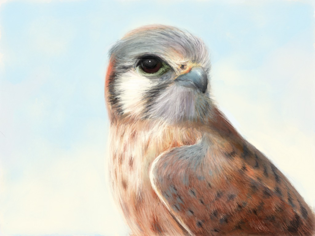 Realistic rendering of a kestrel on Paper