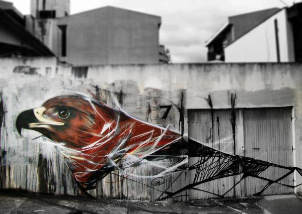 Graffiti Birds by Brazilian Artist L7M (5)