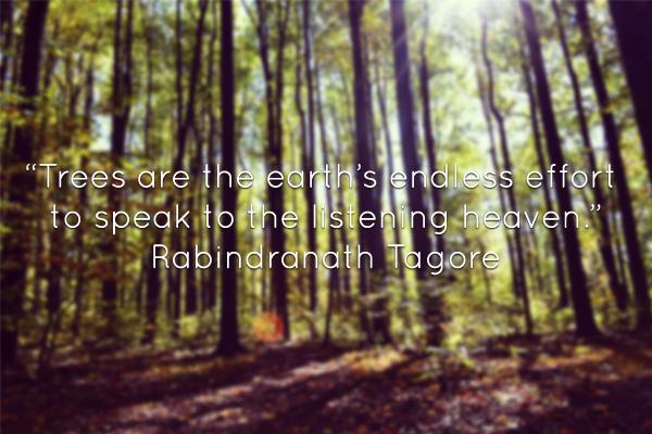 trees-quote