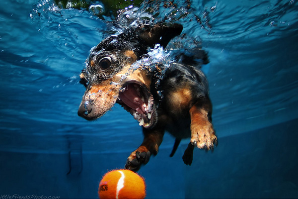 underwater dog photography Photography: Getting the most out of Diverse Environments