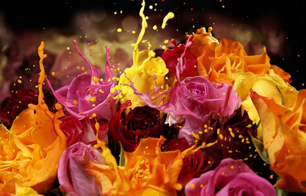 7-rose-bouquet-splash-effect