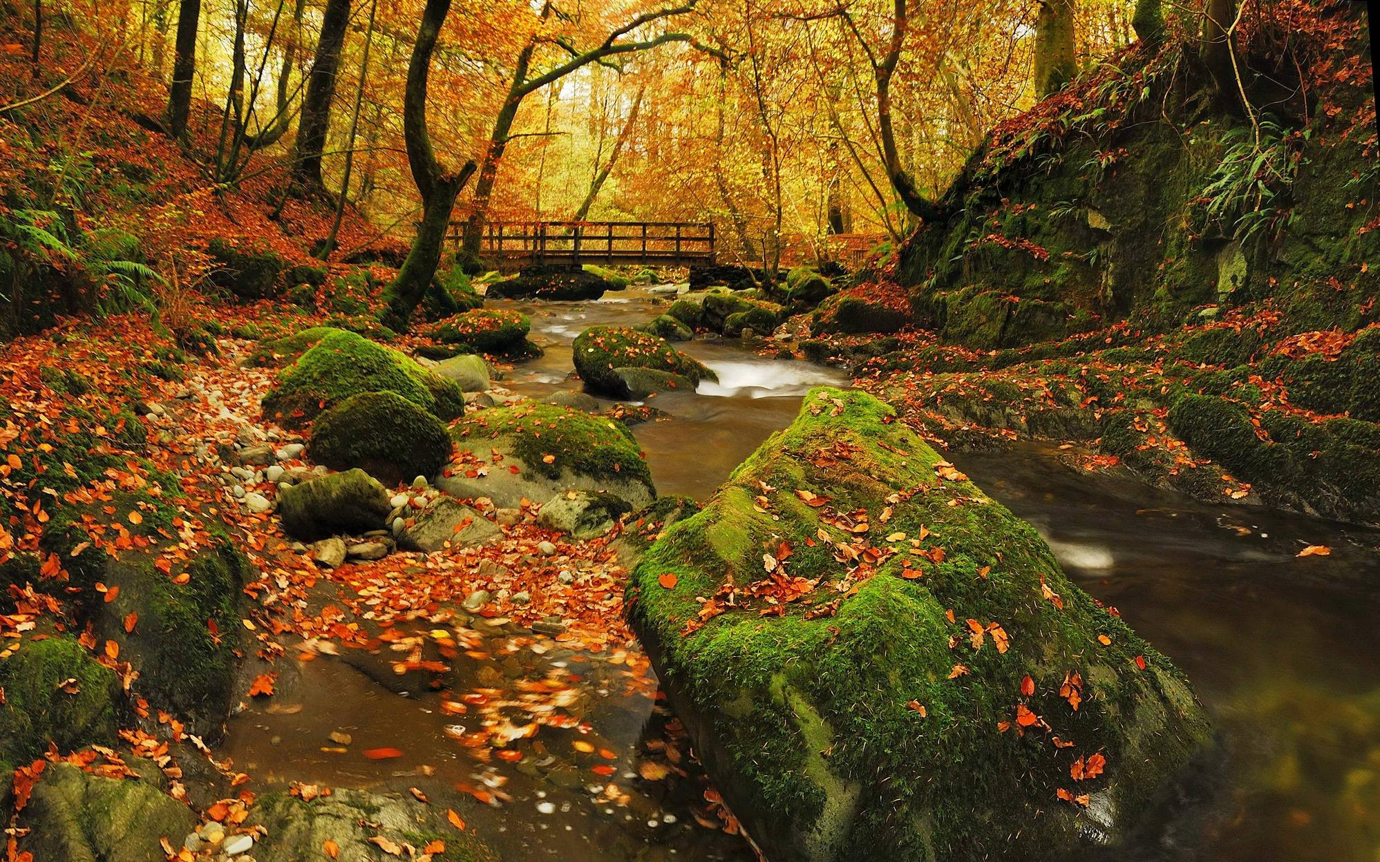 Autumn in Grizedale forest, The lake district, England