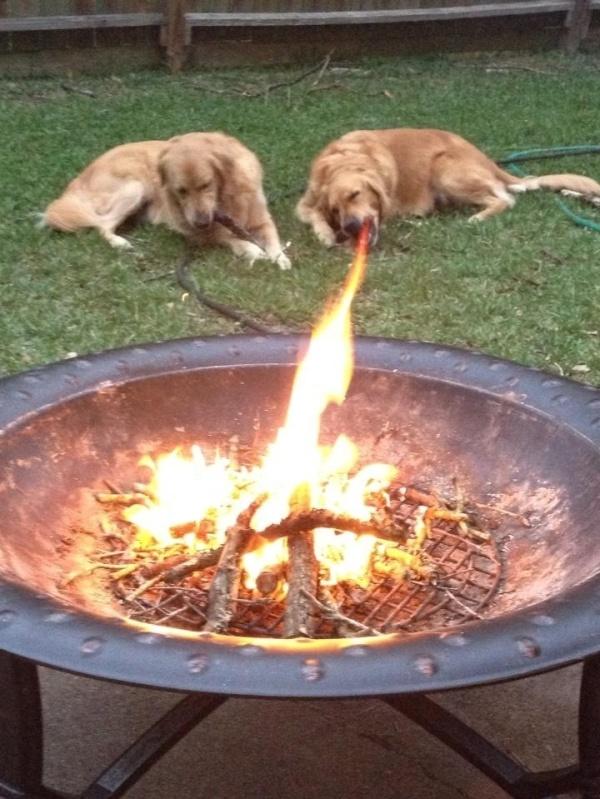 The dog looks like it's breathing fire.
