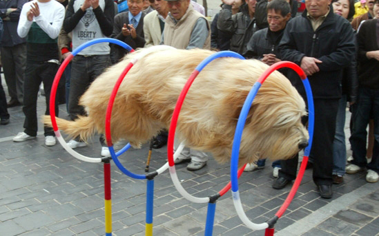 floating dog in china