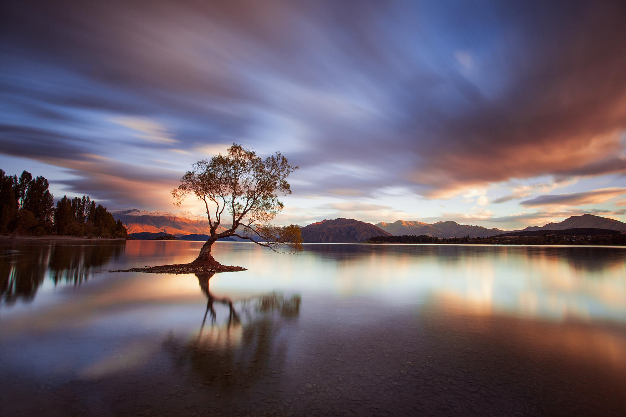 One Calm Tree by Rob Dickinson