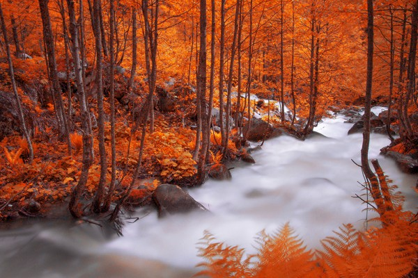 Autumn by Sinan Cans?z