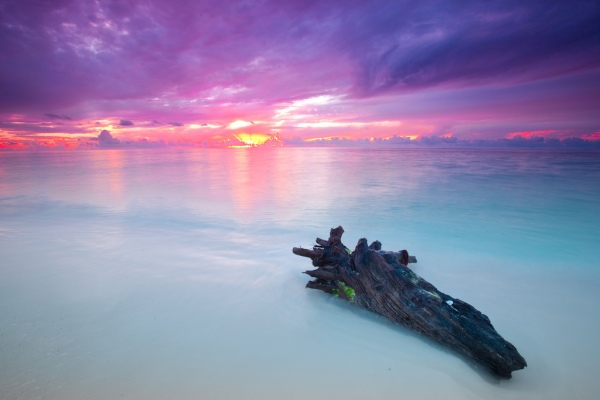 Purple Haze by Jay Andruckow