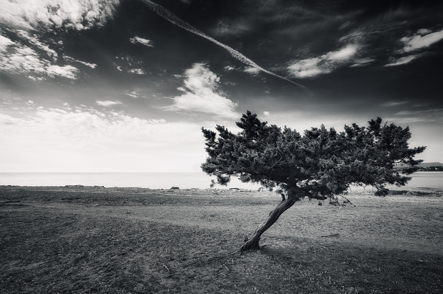 Another Lone Tree by Philipp Klinger
