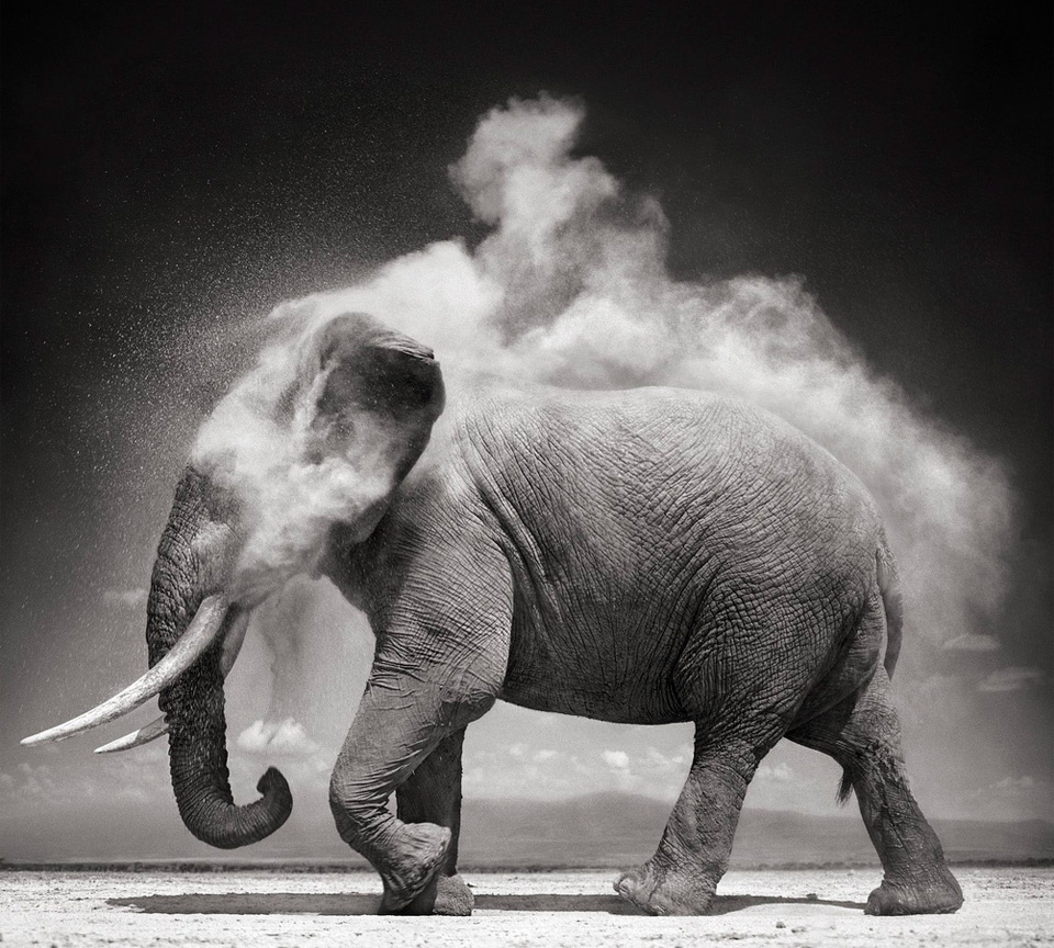 Elephant Dust Bath by Nick Brandt