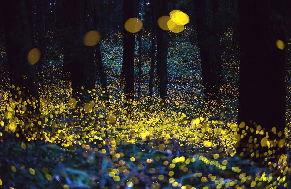 Fireflies On Long Exposure by Rel Ohara
