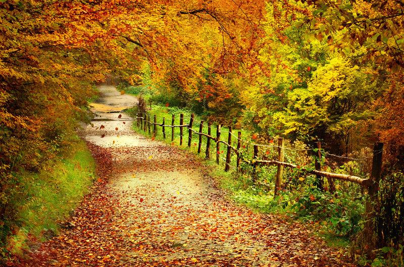 Autumn by Neitheea