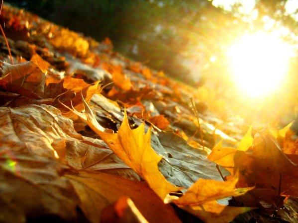 Autumn Leaves by Artifexa