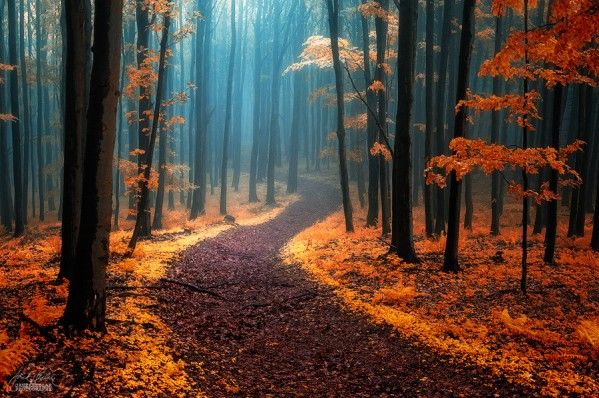 Call of wandering by Janek Sedlar
