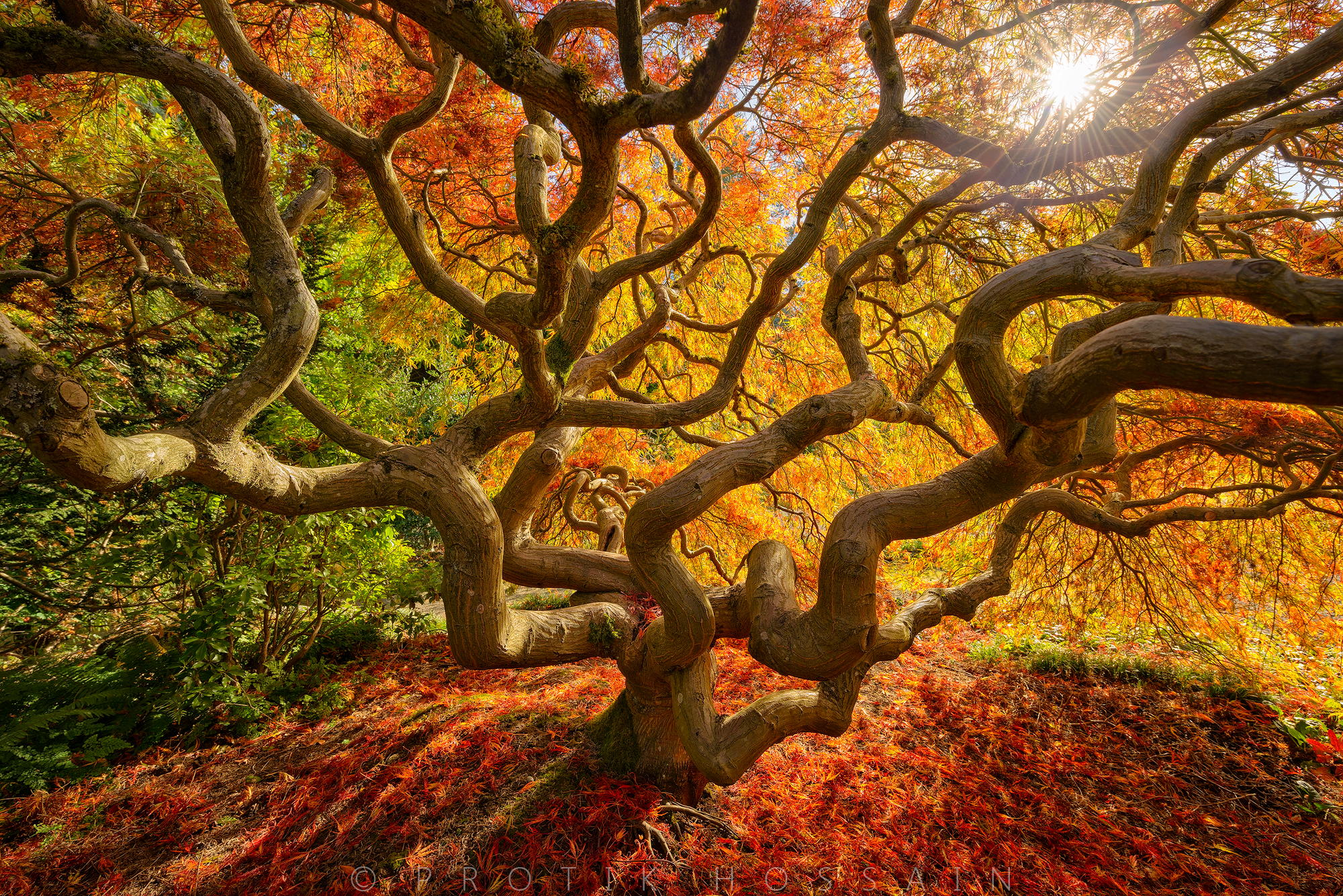 Fall color explosion by Protik Hossain