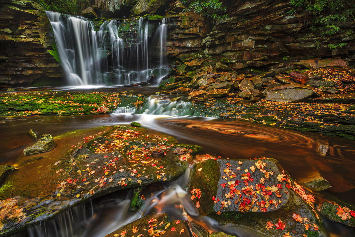 Falling Leaves by Wick Smith