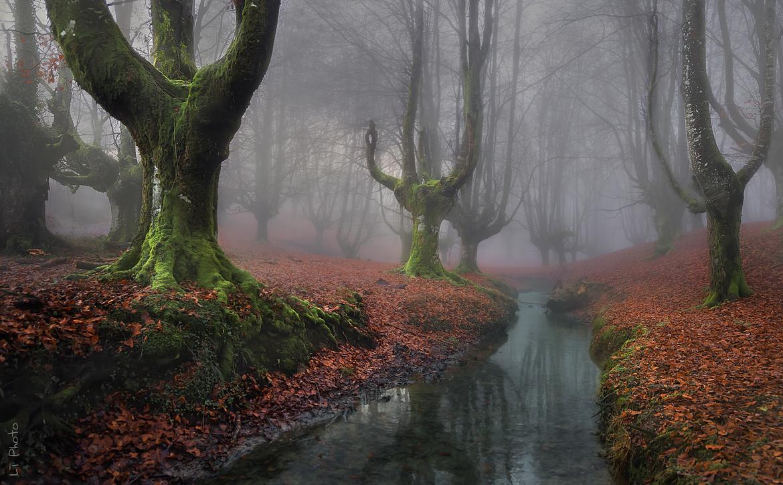 Misty Morning by Javier de la Torre