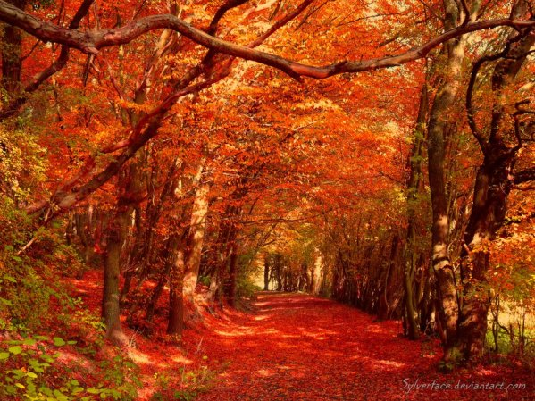 Red Autumn by Sylverface