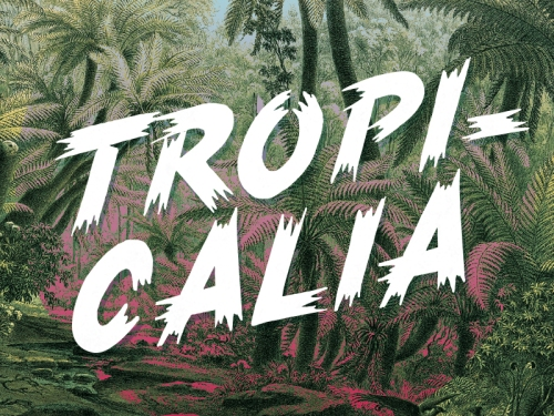 Tropicalia Brush Typeface by Rocco Barbaro