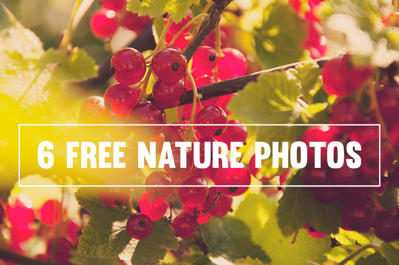 6 Free Nature Photos