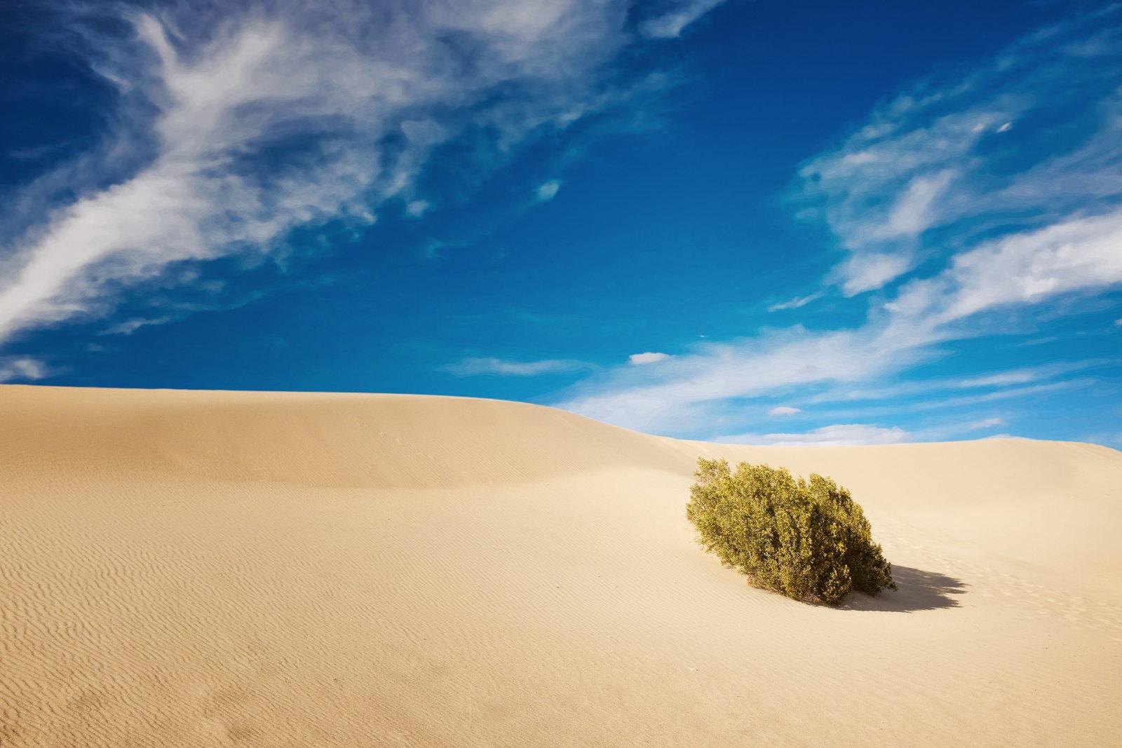 Desert by Mehrdad Abedi
