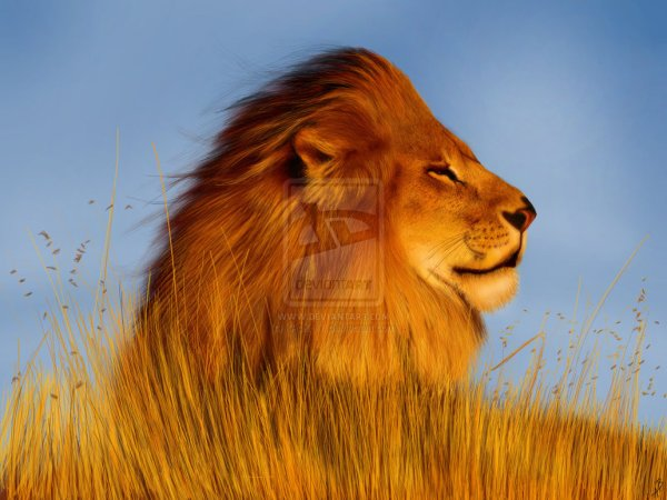 Lion Painting by Amanda
