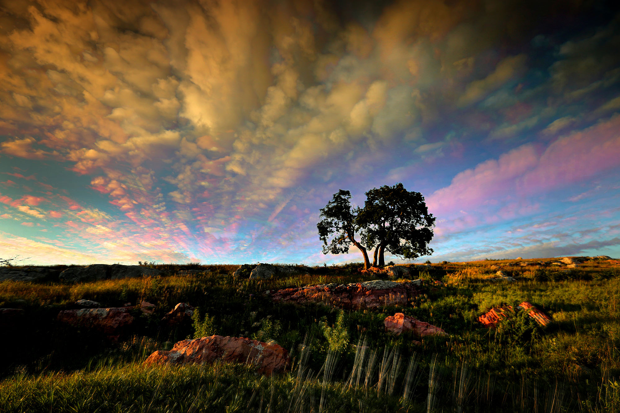 Summertime prairie outside of Luverne, Minnesota by Brian Peterson