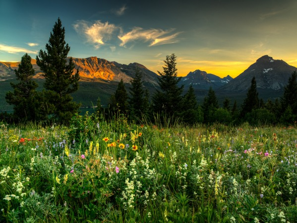 Wildflowers at Glacier National Park by Beau Rogers
